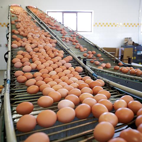 Egg-4
